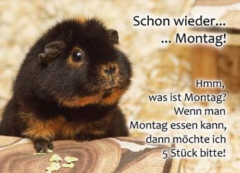 Meerschweinchen Postkarte: Schon wieder Montag!